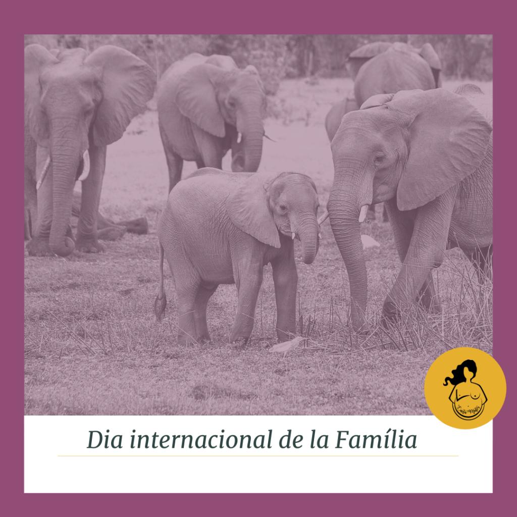Grup d'elefants. #DiaInternacionaldelaFamilia #Lactamater